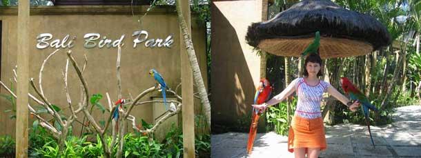 Bali Bird Park Bmc Tour